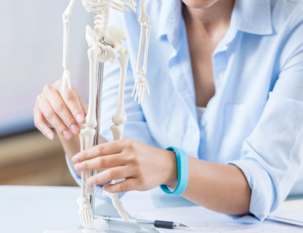 10 érdekes tény a csontokról, amit csak kevesen tudnak