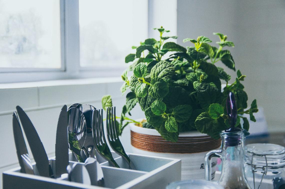 14 otthon is termeszthető fűszernövény