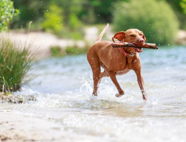 8 imádnivaló kutyafajta