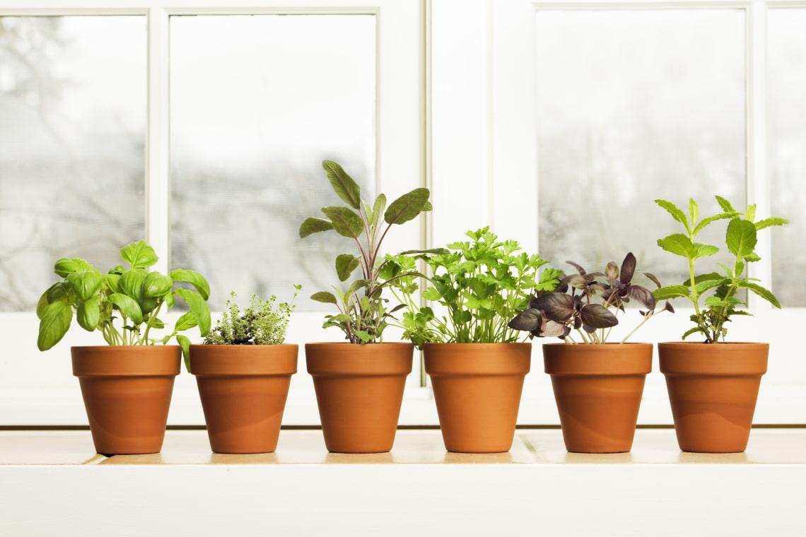A 10 leggyakoribb fűszernövény
