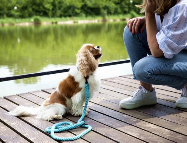 Kiderült, melyik a 10 legjobb kutyafajta gyerek mellé. Egyetértesz a listával?