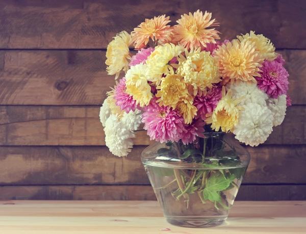7 csodásan illatozó szobanövény