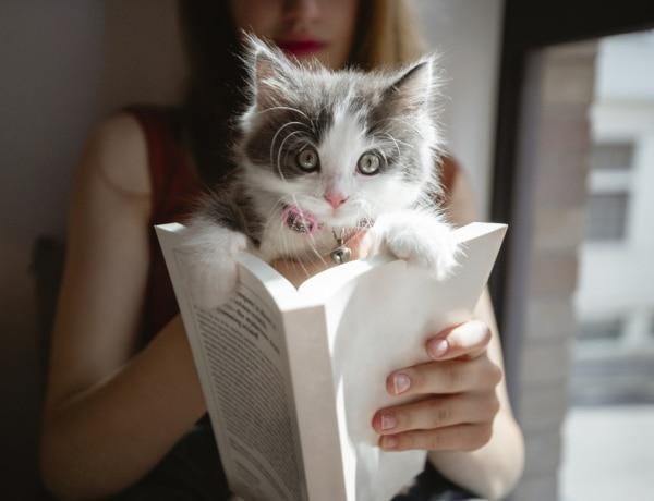 Nevelheted, csak nem érdekli: amit eltitkoltak előled, mielőtt macskád lett