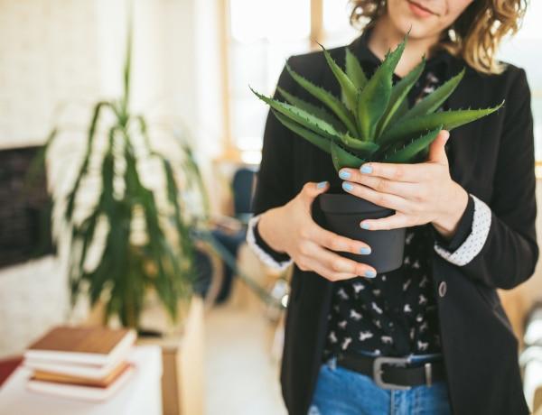 Ez most az 5+1 leghatásosabb légtisztító szobanövény