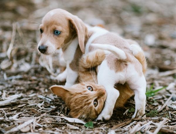 Melyik a kedvenc háziállatod? Sokat elárul rólad