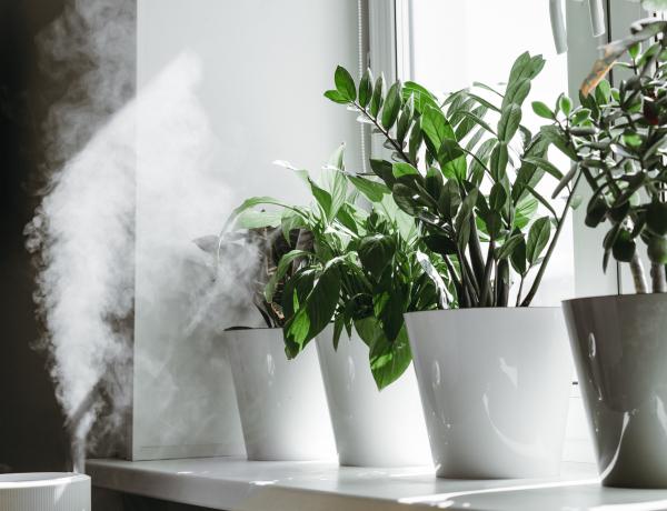 5 hatékony tipp a száraz levegőjű helyiségek kellemes párásításához