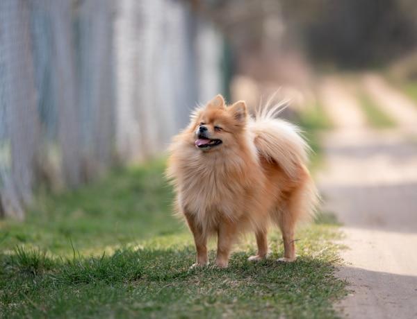 7 icipici kutyafajta, amiről még nem is hallottál
