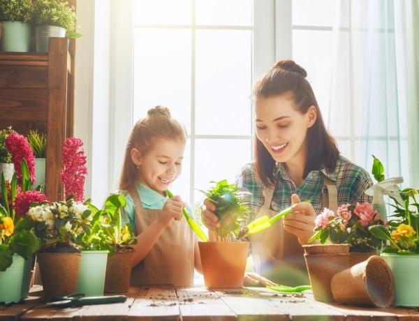 5 mérgező szobanövény, amivel nagyon vigyázz