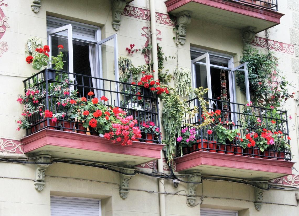 Igénytelen virág a balkonra