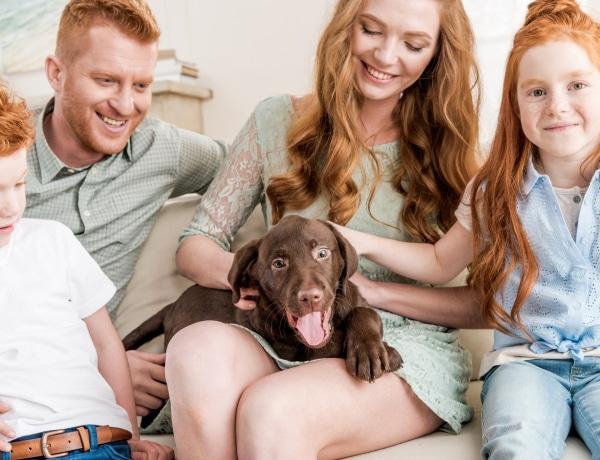 Családbarát kutyát szeretnétek? 7 fajta, akik imádják a gyerekeket