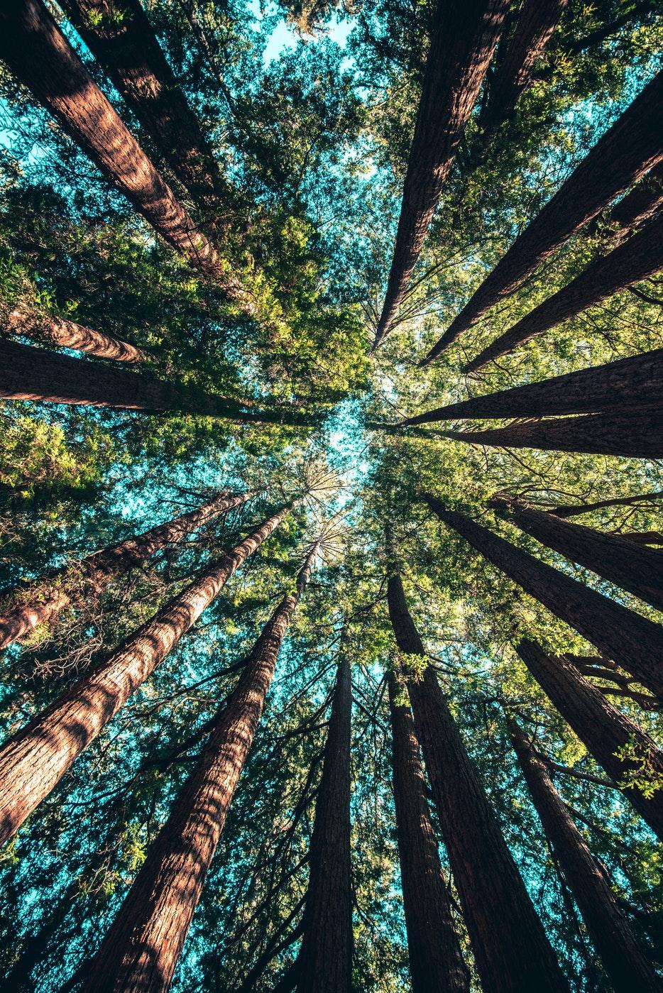Több fa van a Földön, mint csillag a galaxisban