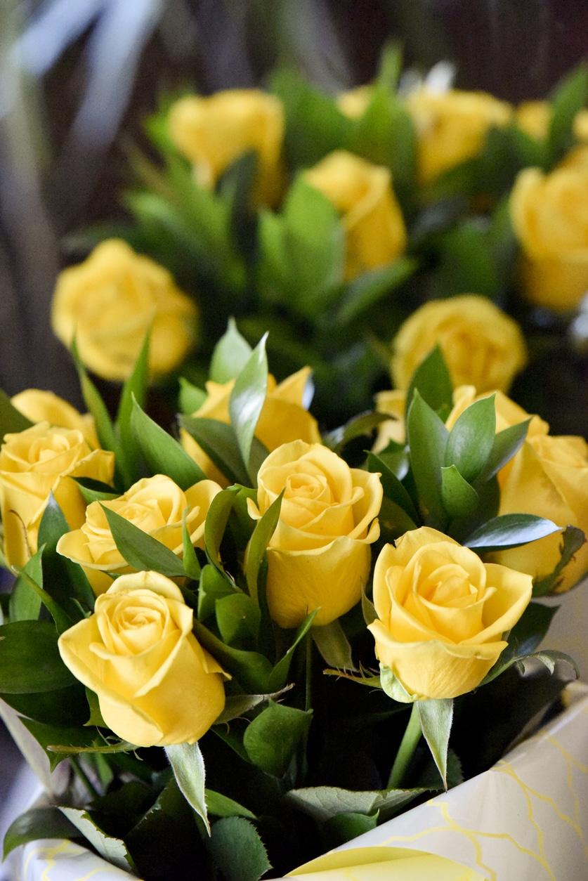 A sárga rózsa