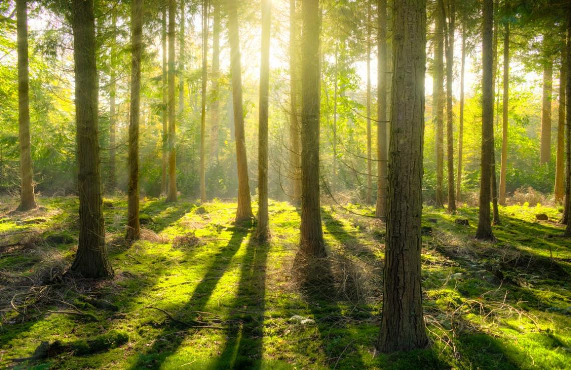 Erdőjárás