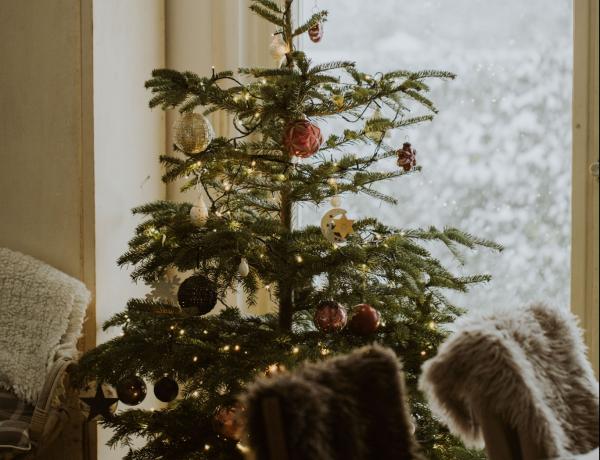 Így hasznosíthatod a száradófélben lévő karácsonyfádat