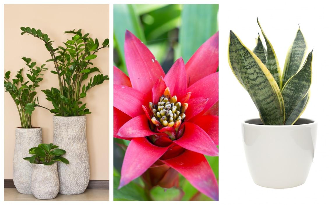 Szép szobanövény
