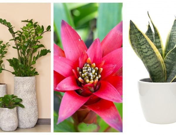 5 igénytelen, mégis szép szobanövény, ami mindent túlél