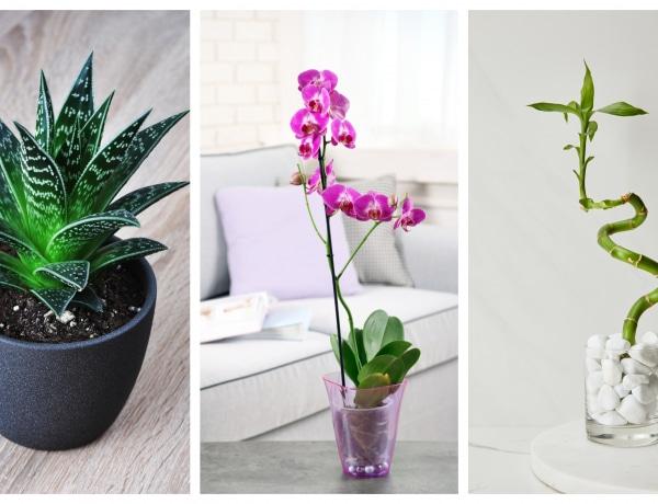 8 szobanövény, ami elűzi az összes negatív energiát