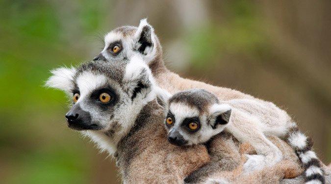 Állatkerti látnivalók: állatkölykök