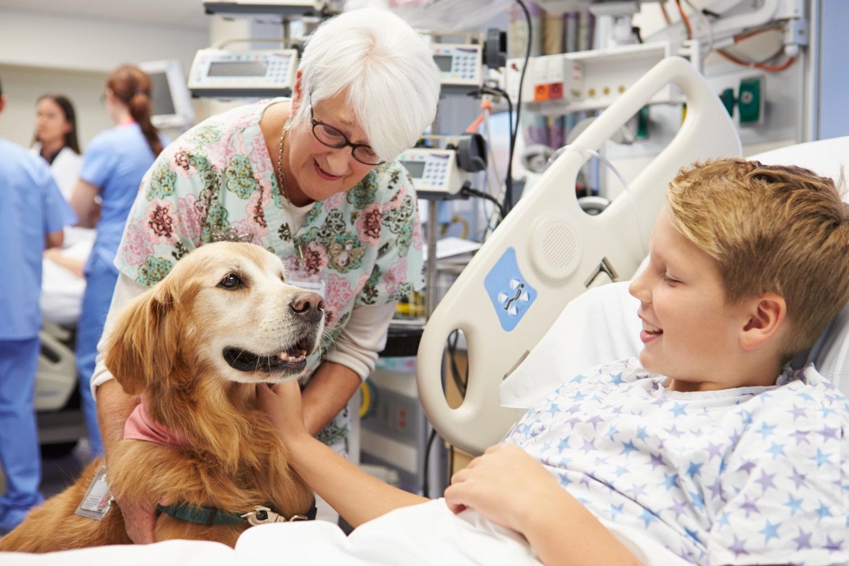 Állatterápia, a mellékhatás nélküli gyógymód