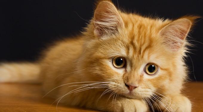 Élet a macskával (ez a cikk vicc, az itt leírtak semmi esetre sem követendők)