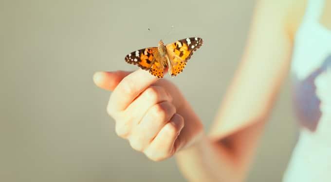 Életleckék a pillangóktól, amiket neked is érdemes lenne megtanulnod