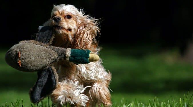 Így játszhatsz a kutyáddal!