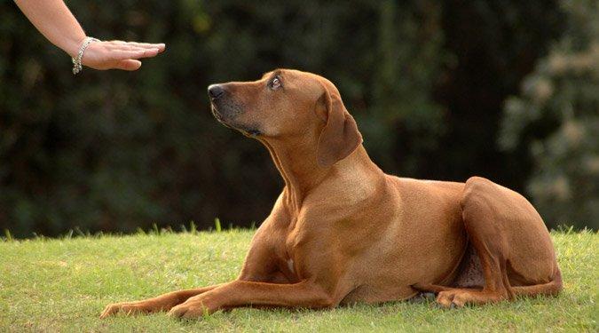Így légy falkavezér a kutyusod szemében