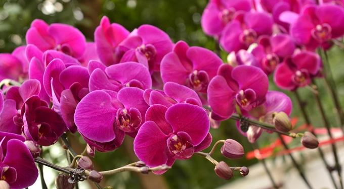 Így lehet szép orchideád – Orchideaápolási egyszeregy