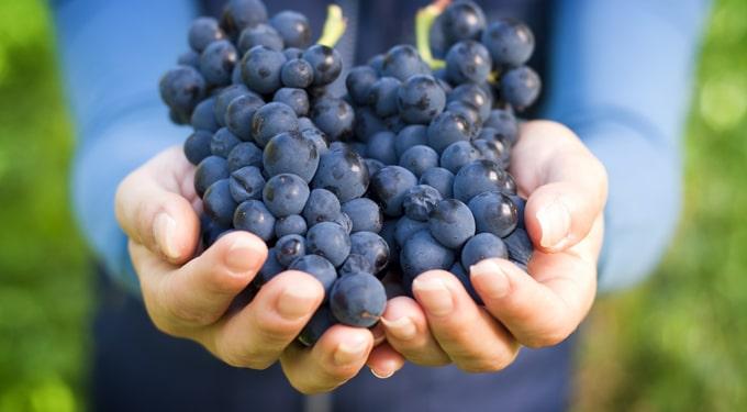 Így méregteleníts szőlővel: mintaétrend a kúrához