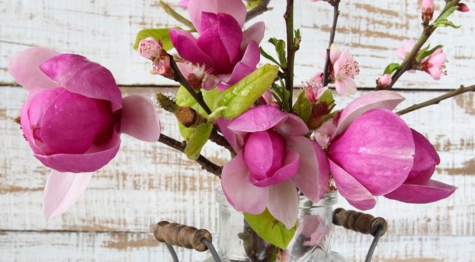Így tartsd vázában a tavaszi ágakat, hogy sokáig éljenek