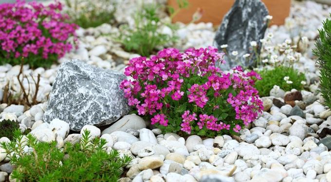Így telepíthetsz saját sziklakertet havasi virágokból