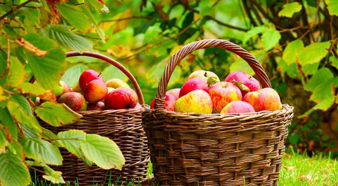 Őszi zöldségek és gyümölcsök, amiket imádni fogsz