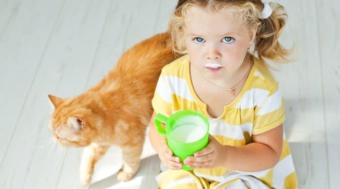 10 étel, amit ne adj a macskádnak