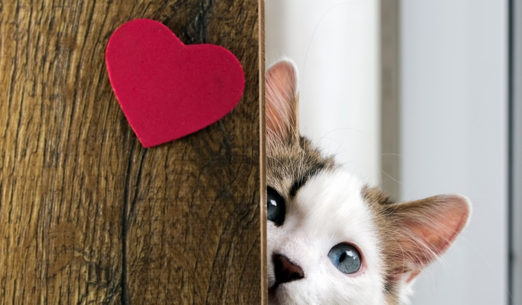 Top 10 tárgy macskarajongóknak