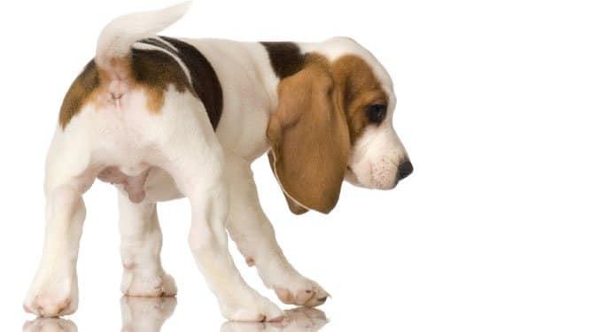 10 tévhit a kutyákkal kapcsolatban