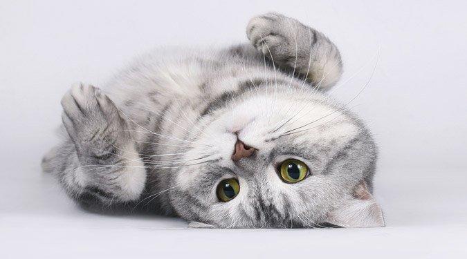 10+1 örök igazság a macskákról!