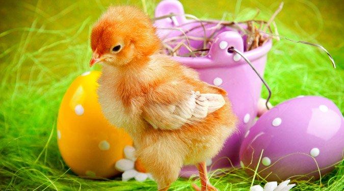20 csodálatos húsvéti képeslap. Küldj te is!