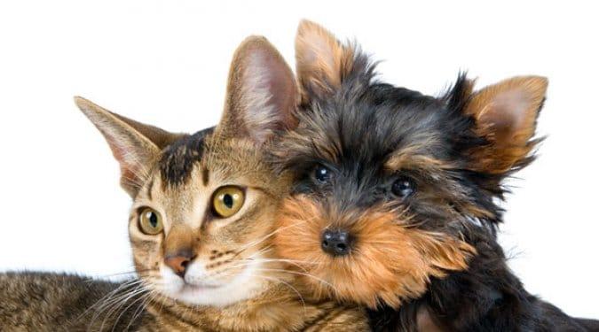 24 vicces fotó a híres kutya macska barátságról
