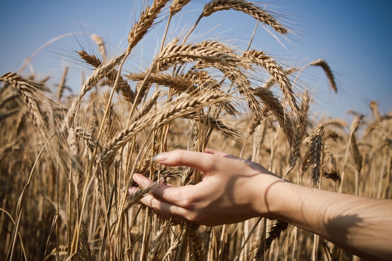 3 ősi gabona, amit ideje jobban megismerni