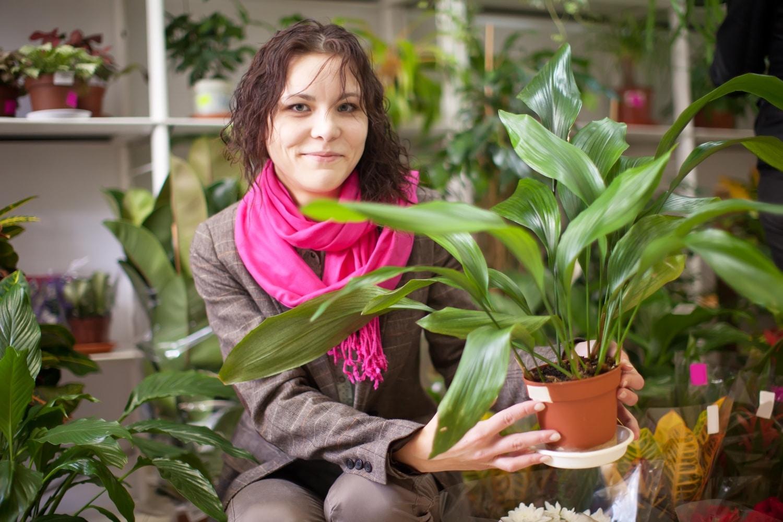 3 kisigényű szobanövény nemtörődöm kertészeknek
