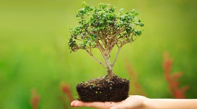 4 kérdés a bonsai neveléséről