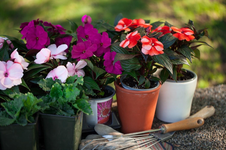 5 aprócska, tarka virág, ami az íróasztalodon is elfér