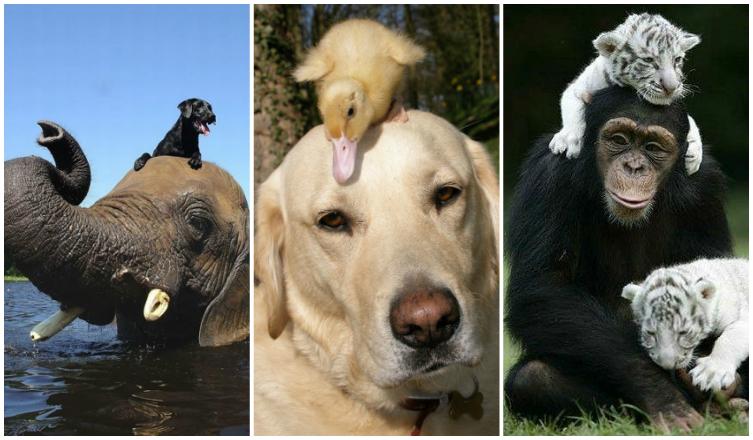 5 furcsa, de szívmelengető állatbarátság