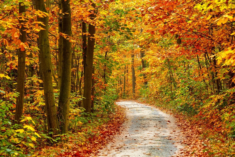 5 gyönyörű hazai erdő, amit ősszel érdemes meglátogatni