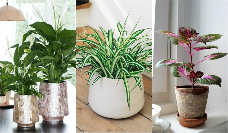 """5 """"oxigén gyártó"""" növény a lakásodba – Hatékonyan tisztítják a levegőt!"""