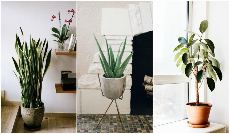 5 strapabíró szobanövény, ami az egészségedre is jó hatással van
