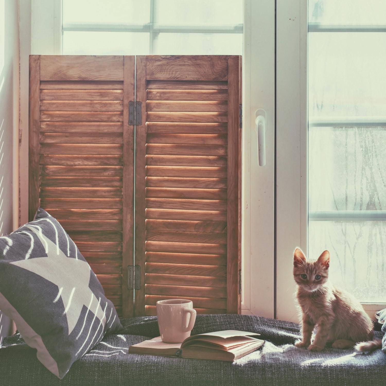 5 szívmelengető macskás könyv, amit hideg estéken olvashatsz