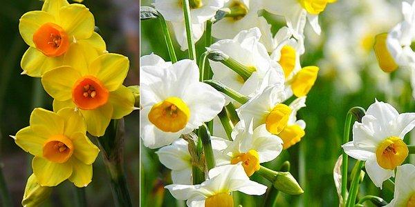 6 csodálatos tavaszi virág ültetése