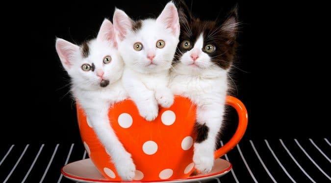 6 különös macskával kapcsolatos babona
