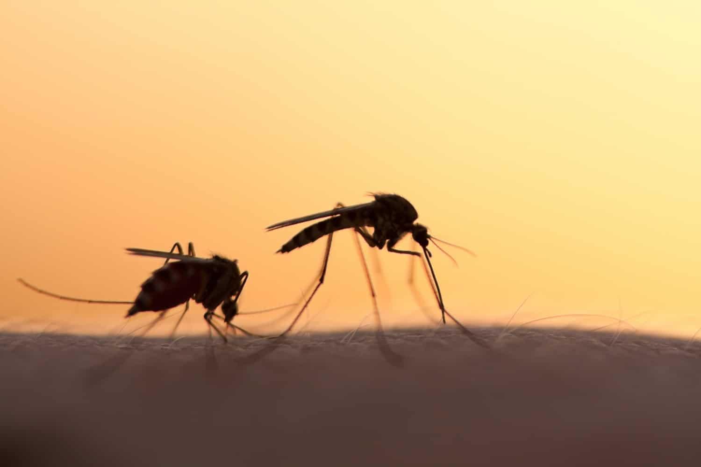 6 természetes megoldás a szúnyogok ellen